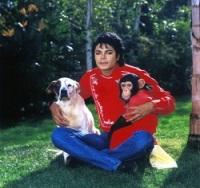 MJ-and-animal-michael-jackson-32178733-2560-2425